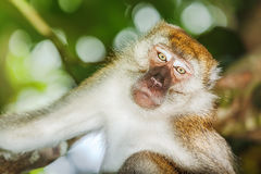 Monkey Stock Photos