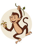 Monkey. Hanging from a branch of a tree Stock Photography