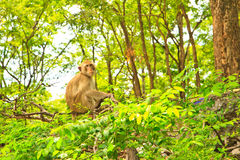 Monkey. Is looking on tree background royalty free stock photos