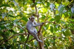 Free Monkey Royalty Free Stock Images - 27776749