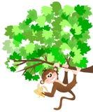 Monkey. Illustration of a monkey holding a banana hanging from a tree limb vector illustration