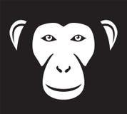 Monkey. Head, ape head,  face Stock Photography