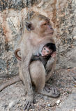 Monkey. Mother and her little baby monkey Royalty Free Stock Photo
