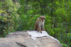 Monkey. Sitting on a towel Royalty Free Stock Photo