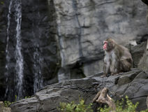 Monkey. Image of monkey sitting on the rock next to waterfall royalty free stock photos
