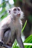 Monkey. An image of a monkey Stock Photo