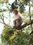 Monkey. On tree branch in forest Stock Photos