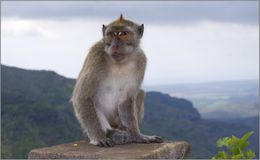 Monkey. On the edge of rock Royalty Free Stock Photography