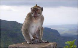 Free Monkey Royalty Free Stock Photography - 8884257