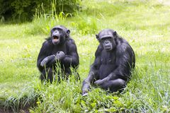 Monkey. S at leisure Royalty Free Stock Images