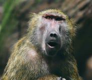 Free Monkey Stock Photos - 9673363