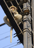 Monkey above Stock Photography