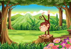 A monkey above the stump Stock Photo