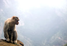 Monkey at a Abyss,India Royalty Free Stock Images