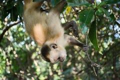 Monkey action Stock Image