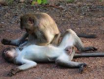 Monkey Affection Stock Photos