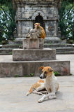 Monkey ahd dog Royalty Free Stock Image
