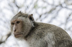 Monkey alone Royalty Free Stock Photos