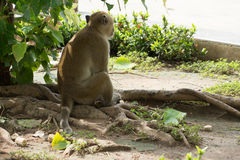 Monkey alone asia only lonesome wildlife nature life Royalty Free Stock Photos