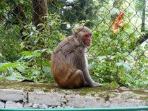 Monkey Alone Stock Photo