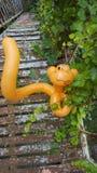 Monkey alrededor foto de archivo libre de regalías