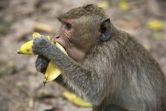 Monkey in Angkor, Cambodia Stock Photography