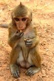 Monkey at Angkor site, Cambodia Stock Images