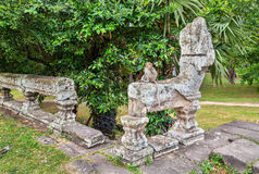 Monkey at Angkor Wat in Cambodia Royalty Free Stock Images