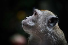 Monkey Animal Stock Images