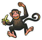 Monkey animal Stock Photography