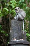 Monkey in the animal forest Royalty Free Stock Photos
