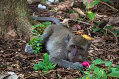 Monkey in the animal forest Stock Photos