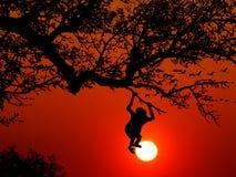 Monkey, Animal, Wilderness, Nature Stock Photography
