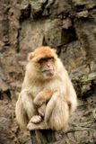 Monkey. Animals nature summer stock photo