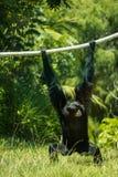 Monkey ao redor fotografia de stock