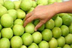 Monkey apple fruit. Hand pick fresh monkey apple fruit background Stock Photo