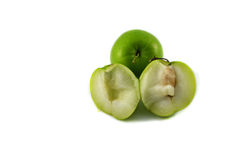 Monkey apple Stock Photography