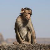 Monkey with attitude. Monkey sitting on edge of Lohagad fort royalty free stock photo