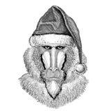Monkey, baboon, dog-ape, ape christmas hat New year eve Merry christmas and happy new year Zoo life Holidays celebration. Wild animal wearing christmas hat New Stock Photography
