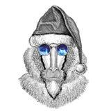 Monkey, baboon, dog-ape, ape christmas hat New year eve Merry christmas and happy new year Zoo life Holidays celebration. Wild animal wearing christmas hat New Royalty Free Stock Photo