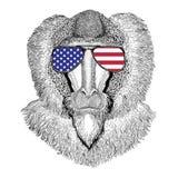Monkey, baboon, dog-ape, ape Hand drawn illustration for tattoo,. Wild animal wearing glasses with USA flag United states of America flag Zoo animal Stock Images