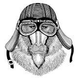 Monkey, baboon, dog-ape, ape Hand drawn image of animal wearing motorcycle helmet for t-shirt, tattoo, emblem, badge Royalty Free Stock Photography
