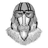 Monkey, baboon, dog-ape, ape wearing biker helmet Animal with motorcycle leather helmet Vintage helmet for bikers. Wild animal wearing biker helmet Animal with Stock Photos
