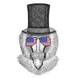 Monkey, baboon, dog-ape, ape wearing cylinder top hat and glasses with usa flag United states of America flag. Vintage style drawing Animal wearing cylinder top Royalty Free Stock Photos