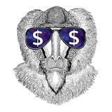 Monkey, baboon, dog-ape, ape wearing glasses with dollar sign Illustration with wild animal for t-shirt, tattoo sketch. T-shirt print with wild animal wearing Stock Images
