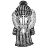 Monkey, baboon, dog-ape, ape wearing knitted hat and scarf. Wild animal wearing knitted hat and scarf Stock Photo