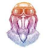 Monkey, baboon, dog-ape, ape wearing vintage aviator leather helmet. Image in retro style. Flying club or motorcycle