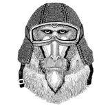 Monkey, baboon, dog-ape, ape wearing vintage motorcycle helmet Tattoo, badge, emblem, logo, patch, t-shirt. Wild animal wearing vintage motorcycle helmet Royalty Free Stock Image