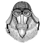 Monkey, baboon, dog-ape, ape Wild animal wearing biker motorcycle aviator fly club helmet Illustration for tattoo Royalty Free Stock Photos