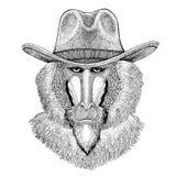 Monkey, baboon, dog-ape, ape Wild animal wearing cowboy hat Wild west animal Cowboy animal T-shirt, poster, banner. Wild animal wearing cowboy hat Wild west Stock Photos